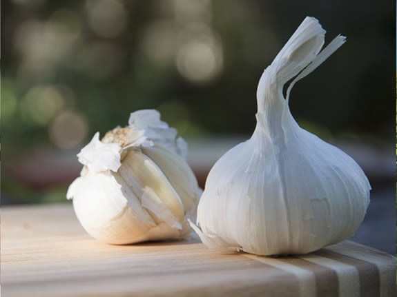 garlic: one of the episodes presented at 'Deconstructing Dinner', February 6, 2014 in Gibsons BC